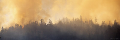 Fire in a Forest, Six Rivers National Forest, Gasquet, California, USA Photographic Print by  Panoramic Images
