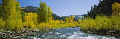 River Flowing in the Forest, San Miguel River, Colorado, USA Photographic Print by  Panoramic Images