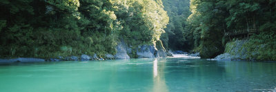 River in a Forest, Blue Pools, Mt Aspiring National Park, Otago Region, South Island, New Zealand Photographic Print by  Panoramic Images