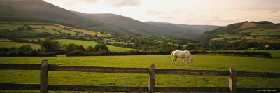 Horse in a Field, Enniskerry, County Wicklow, Republic of Ireland Photographic Print by  Panoramic Images