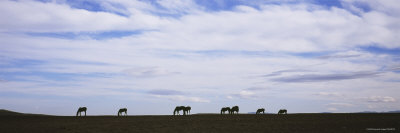 Silhouette of Horses in a Field, Montana, USA Photographic Print by  Panoramic Images
