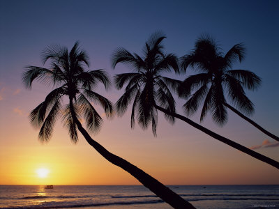 Palm Trees and Tropical Beach, Maldive Islands, Indian Ocean Photographic Print by Steve Vidler
