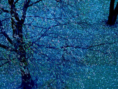 Autumn Tree in Blue, Green, and Purple Photographic Print by Robert Cattan