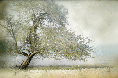 Tree in Field of Flowers Fotografie-Druck von Mia Friedrich