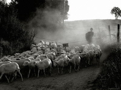 The Shepherd Photographic Print by Monika Brand