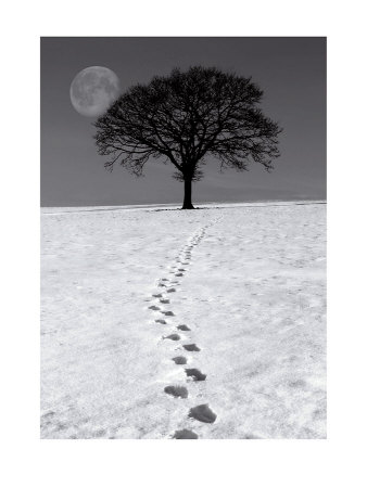 Winter Moon Prints by Ilona Wellman
