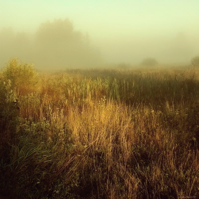Tall Grass in Foggy Field Photographie