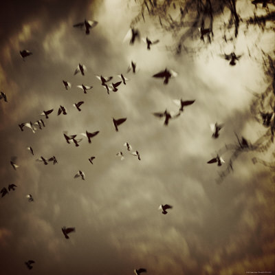 Birds Flying overhead Photographie