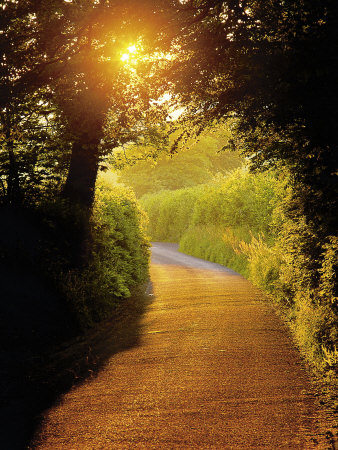 Sunlit Country Lane, Devon, England Photographic Print
