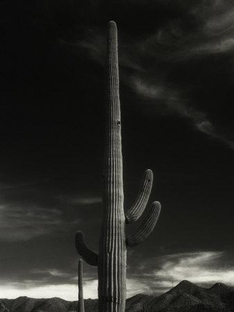 Cactus in Capitol Reef National Park, Utah Photographic Print by David Wasserman