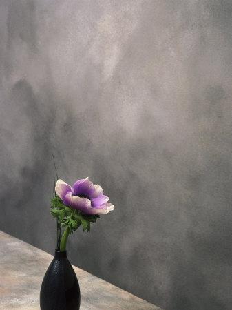 Pink Anemone in Vase Photographic Print by David Wasserman