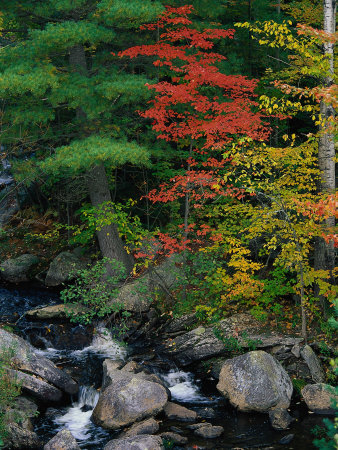 Fall Scenic, Acadia National Park, Maine Photographic Print by Elizabeth DeLaney