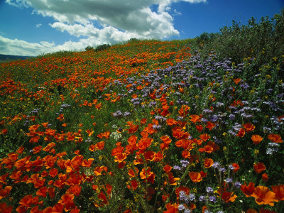 Colorful Field of Flowers Photographic Print by Gary Conner