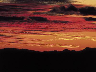 Sonoran Desert, Near Tucson, Arizona Photographic Print by Elizabeth DeLaney