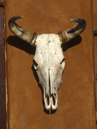Skull, Santa Fe, NM Photographic Print!