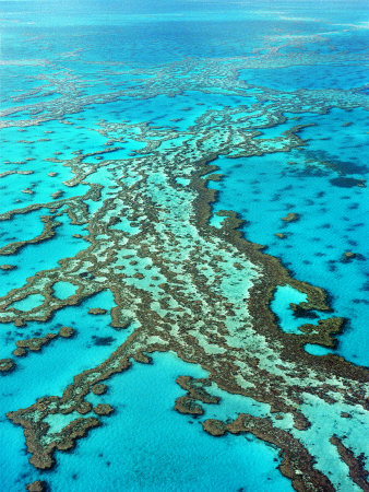 Great Barrier Reef, Queensland, Australia Photographic Print by Peter Walton