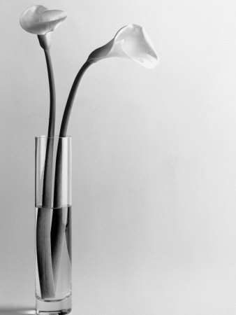 Calla Lilies in Vase Photographic Print by Howard Sokol
