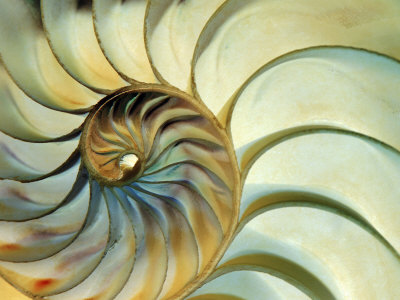 Close-up of Nautilus Shell Spirals Fotoprint av Ellen Kamp