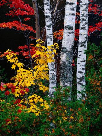 Fall Color, Old Forge Area, Adirondack Mountains, NY Lámina fotográfica por Jim Schwabel