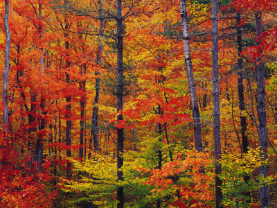 Autumn Colors New Hampshire