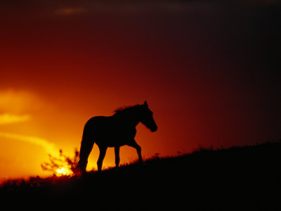 A View of a Wild Horse Silhouetted by the Setting Sun Stampa fotografica di Gehman, Raymond