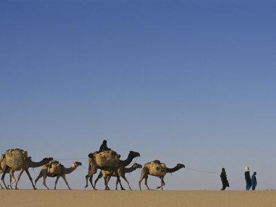 Camel Caravans Cross the Desert to Trade Salt, Sahara Desert, Niger Fotografisk tryk af Michael S. Lewis