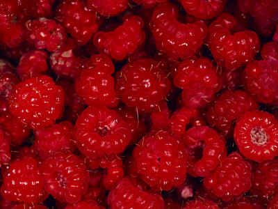 A Pile of Wild Raspberries Photographic Print