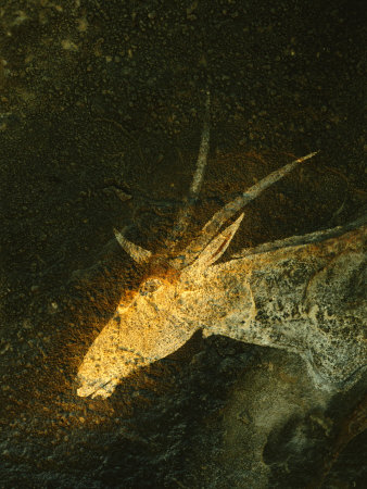 A San Mural Painting of an Eland, an Animal Sacred to the San Fotoprint av Kenneth Garrett