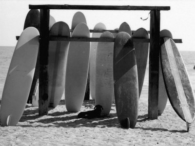 Dog Seeking Shade under Rack of Surfboards at San Onofre State Beach Fotografisk tryk af Allan Grant