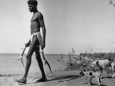 Australian Aborigine Man Bringing Back Two Monitor Lizards Known as Goannas to His Clan Photographic Print by Fritz Goro