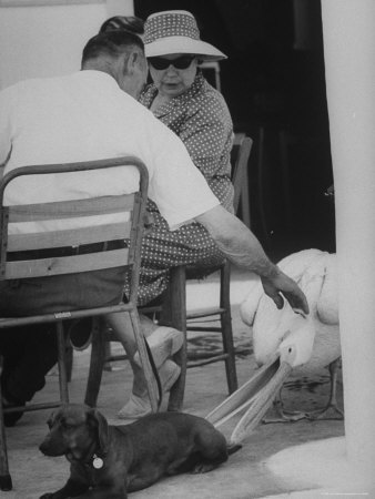 Dachshund Ignoring Pelican's Teasing Photographic Print by James Burke