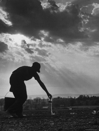 Farmer Watering the Crops Photographic Print by Ed Clark