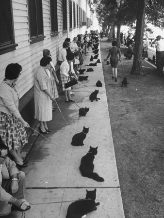"""Owners with Their Black Cats, Waiting in Line For Audition in Movie """"Tales of Terror"""" Fotografisk tryk af Ralph Crane"""