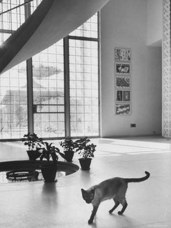 Siamese Cat in Reception Hall of Residence of Us Ambassador to India Photographic Print by James Burke