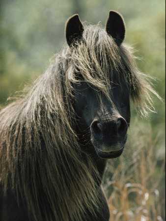 Portrait of a Chincoteague Pony Photographic Print by James L. Stanfield