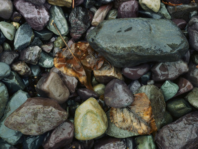 Rocks and Dead Leaves Photographic Print by Sam Abell