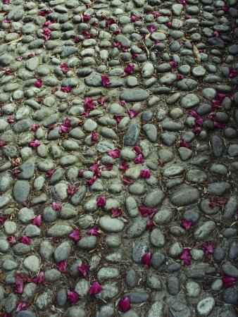 Flower-Strewn Cobblestones Photographic Print by Sam Abell