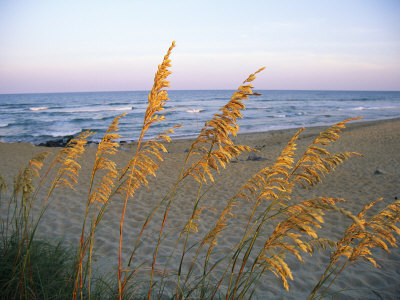 Beach Scene with Sea Oats Fotografisk tryk
