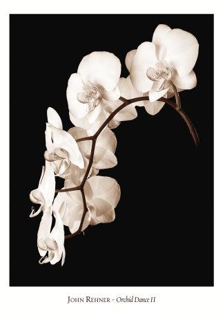 Orchid Dance II Kunsttryk