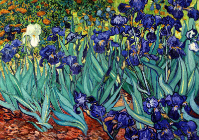 Irises, Saint-Remy, c.1889 Art Print