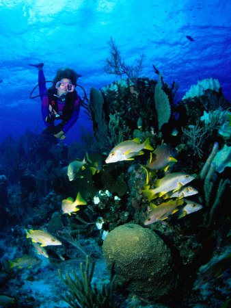 A Diver Watches a Group of Schoolmasters Congregate Around One of the Cayman Reefs, Cayman Islands Photographic Print by Michael Lawrence