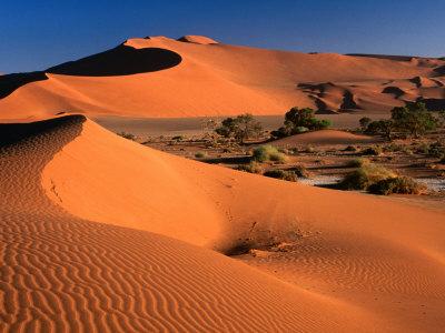 Namib Sand Dunes, Nambia Desert Park, Namib Desert Park, Erongo, Namibia Lámina fotográfica por Carol Polich