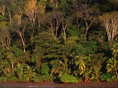 Tropical Rainforest, Corcovado National Park, Puntarenas, Costa Rica Photographic Print by Ralph Lee Hopkins