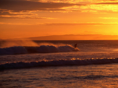 Surfer at St. Kilda Beach, Dunedin, New Zealand Photographic Print by David Wall