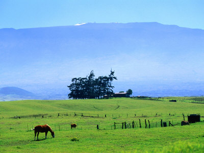 Horses Grazing Beneath the Towering Mauna Kea on Pastoral Parker Ranch at Waimea, Hawaii, USA Photographic Print by Ann Cecil