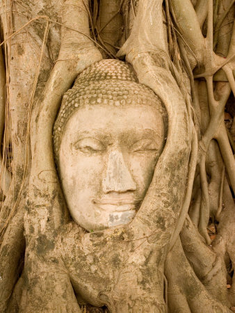Buddha in Tree Ruts at Ayuthaya, Siam, Thailand Photographie