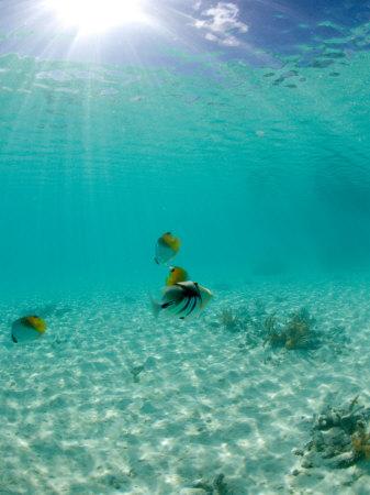 Le Maitai Dream Fakarava Resort, Fakarava, Tuamotus, French Polynesia Stampa fotografica di Michele Westmorland