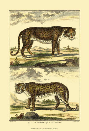 Panther and Leopard Posters by Denis Diderot