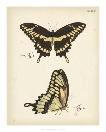 Butterfly Profile I Giclee Print