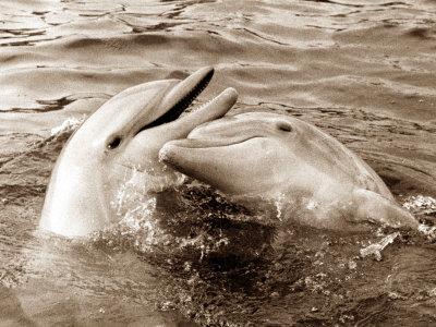 Dolphin Friendship Photographic Print
